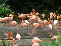 Rosa Flamingos royaltyfria foton