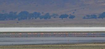 Rosa Flamingos stockfoto