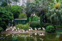 Rosa Flamingos im Garten Stockbilder