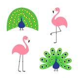 Rosa flamingouppsättning för påfågel För fjäder öppen svans ut Härlig exotisk tropisk fågel royaltyfri illustrationer