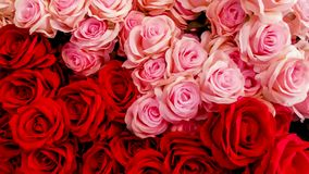 Rosa - flor, ramalhete, flor, dúzia rosas, grupo de flores foto de stock