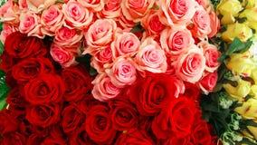 Rosa - flor, ramalhete, flor, dúzia rosas, grupo de flores fotografia de stock royalty free