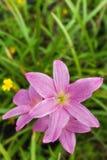 Rosa flora i trädgården Royaltyfri Bild