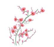 Rosa floral da flor da pintura de Art Watercolor Fotos de Stock Royalty Free