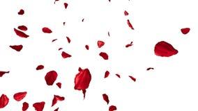 Rosa flyga för kronblad stock illustrationer