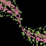Rosa flygblommor Royaltyfria Bilder
