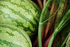 Rosa frö för vattenmelonsellerifänkål Arkivfoto