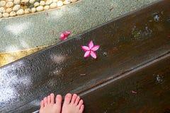 Rosa Frangipaniblume oder Plumeriablume auf nass h?lzernem Fu?weg zum Badekurort stockfotos