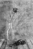 Rosa fresca do vermelho na garrafa de vidro no fundo de madeira Preto e W Foto de Stock