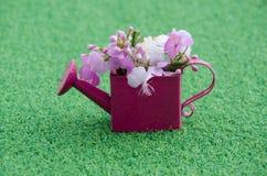 Rosa färgblomma i behållare Royaltyfria Foton