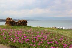 Rosa färgträdgård vid havet Arkivbilder