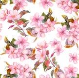 Rosa Fruchtapfel, Kirsche, Kirschblüte blüht Nahtlose Blumenschablone Aquarell auf weißem Hintergrund Stockfotos