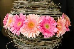 Rosa Gänseblümchenblumen im Korb Stockfotografie
