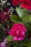Rosa Gartennelke in einem Blumenstrauß lizenzfreie stockbilder