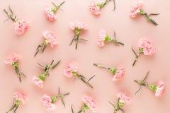 Rosa Gartennelkenblumen auf Pastellhintergrund Flache Lage, Draufsicht, Kopienraum lizenzfreies stockfoto