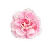Rosa Gartennelkenisolat auf Weiß mit Arbeitsweg Stockfoto