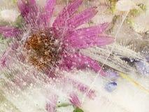 Rosa gefrorene organische Abstraktion Lizenzfreies Stockfoto