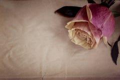 Rosa-gelbe Rose auf dem dunkelgrauen Hintergrund des Schiefers Beschneidungspfad eingeschlossen weinlese stockfoto