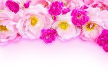 Rosa gelockte Rosen und kleine vibrierende rosa Rosen Lizenzfreies Stockfoto