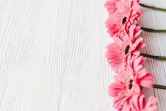 Rosa gerbera på vit träbakgrund, utrymme för text brigham royaltyfri foto