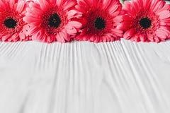 Rosa gerbera på vit träbakgrund, utrymme för text brigham royaltyfri bild