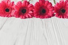 Rosa gerbera på vit träbakgrund, utrymme för text brigham royaltyfria bilder