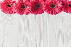 Rosa gerbera på vit träbakgrund, utrymme för text brigham arkivfoton