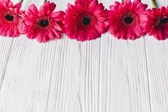 Rosa gerbera på vit träbakgrund, utrymme för text brigham arkivbilder