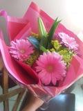 Rosa Gerberagänseblümchen-Blumenblumenstrauß Lizenzfreie Stockfotos