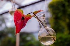 Rosa Gerberagänseblümchen in einem Glasvase lizenzfreie stockfotografie