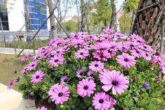 Rosa gesang Blumen Stockfotos
