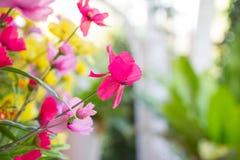Rosa Gewebeblumen Lizenzfreies Stockfoto