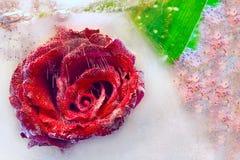 Rosa in ghiaccio Immagine Stock