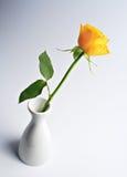 Rosa gialla fotografie stock