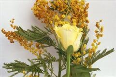 Rosa gialla con la mimosa su un fondo bianco fotografia stock libera da diritti