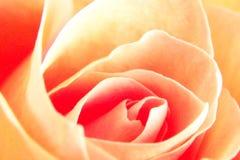 Rosa gialla molle Fotografie Stock