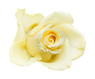 Rosa giallo pallida isolata Fotografie Stock Libere da Diritti