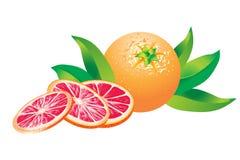 Rosa grapefrukter på vit bakgrund Fotografering för Bildbyråer