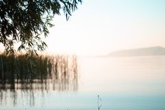 Rosa gryningsoluppgång på sjön, trädfilialer ovanför sjön royaltyfri foto