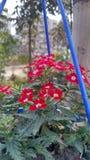 Rosa hängende Blume lizenzfreies stockbild