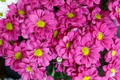 Rosa härliga blommor i detalj royaltyfri foto
