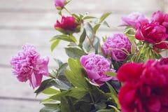Rosa härliga flovers och gröna färger royaltyfria foton