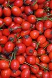 Rosa höftfrukter Arkivbild