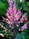 Rosa h?rliga blommor arkivbild