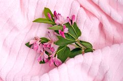 rosa handduk 3 royaltyfria foton