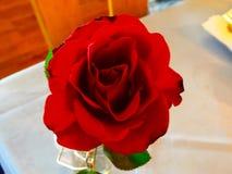 Rosa hermosa del rojo en el restaurante Imágenes de archivo libres de regalías