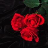 Rosa hermosa del rojo en el satén negro Imagen de archivo libre de regalías
