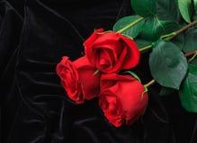 Rosa hermosa del rojo en el satén negro Foto de archivo