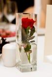 Rosa hermosa del rojo en un florero cuadrado claro Fotografía de archivo