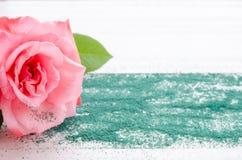Rosa hermosa del rosa con la arena verde en un fondo de madera blanco Fotos de archivo libres de regalías